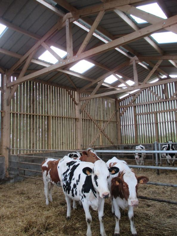 hangar agricole en bois pour stabulation