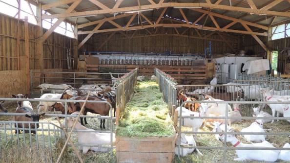 Aménagement chèvrerie dans batiment bois en kit