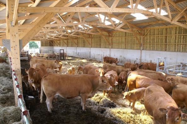 stabulation charpente bois en kit couverture fibrociment pour vaches allaitantes